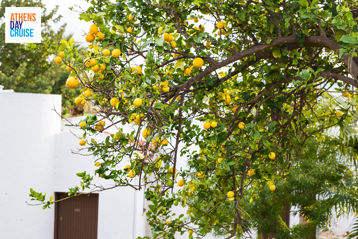 What to taste in Poros – Lemon Sweet Spoonsfeatured_image